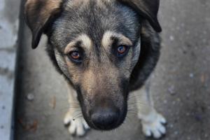 За год в Одессе выловили около 3 тысяч бездомных собак
